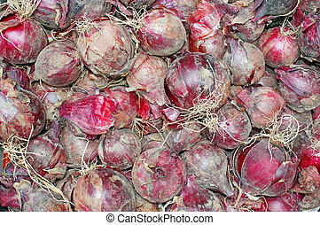 Red onions have just dug out of the earth as background