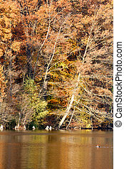 Autumn Shores - Colorful fall foliage on the shore of lake...