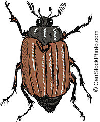 chafer - hand drawn, doodle, sketch illustration of chafer