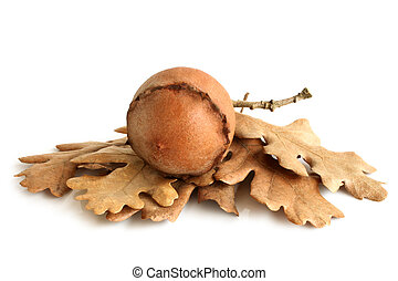 Dried nut with leaves on white background