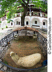 Sheep on the courtyard of the monas - Bachkovo Monastery -...