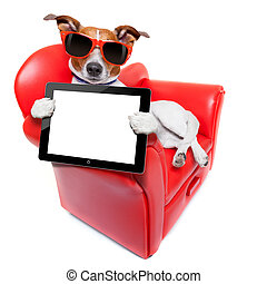 dog sofa - dog holding a blank and empty tablet pc computer...