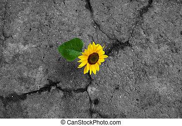 Sunflower on monochrome background