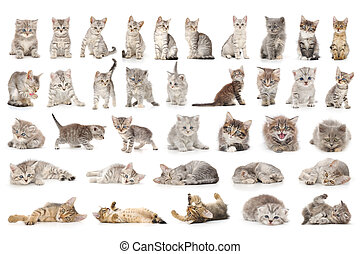 cat set - collage of cute small grey cats isolated on white
