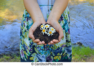 organic - five hands holding and caring a young green plant...