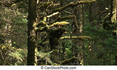 Northern Rainforest