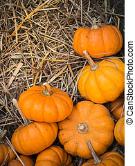 Thanksgiving pumpkins background - Thanksgiving pumpkins on...
