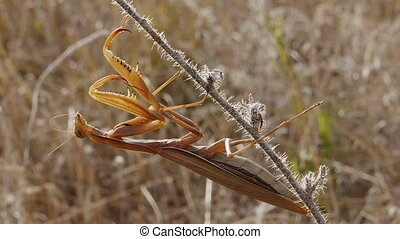 praying mantis - mantis camouflaged on dead branches