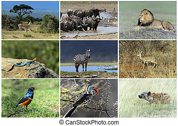 African wild animals safari collage, large group of fauna