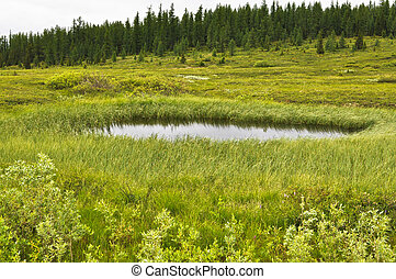 Marshy tundra near the river Lemva in the polar Urals The...