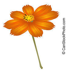 flower - orange flower isolate on a white background