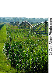 Irrigated Corn Field - A irrigated corn field with a hazy...