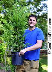 Planting a Cypress - young man holding a Leyland Cypress...