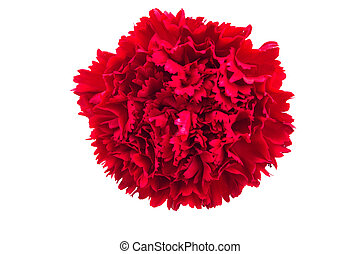Red flowers , clipping path included - Red flowers on white...
