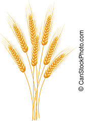Ripe Ears wheat set. Isolated detailed template. EPS10