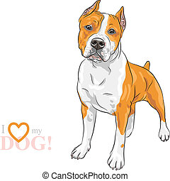 vector sketch dog American Staffordshire Terrier breed -...
