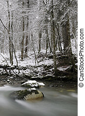 Landscape with mountain stream in snow covered forest