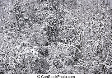 View on a snow covered forest.