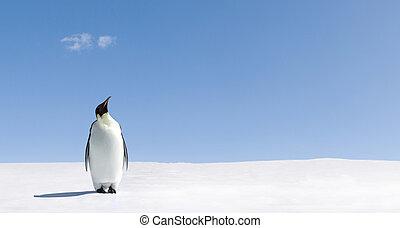 Looking up - Penguin standing in Antarctica looking into the...