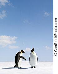 Rejection - Penguin gets rejected