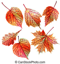 Set of colorful autumn leaves.