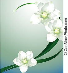 white flower - white orchid with green leaf on the blue...