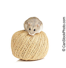 Dwarf Hamster Sitting on Ball of String