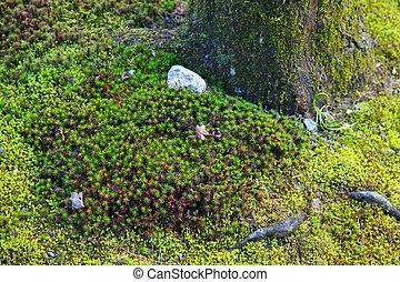 lichen  - vivid lichen texture with the tree.