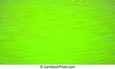 The water is green in a warm pond. Filamentous algae.