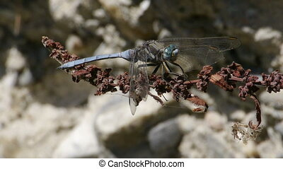 blue dragonfly on dry branch nearby mountain river