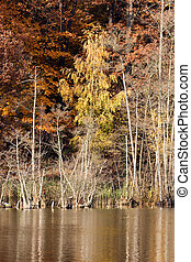 Autumn Woods - Colorful fall foliage on the shore of lake...