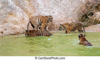 BANGKOK, THAILAND - FEBRUARY 2014: People with tiger temple