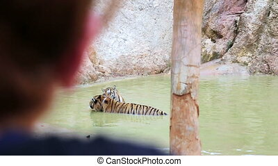 People watching tiger in water