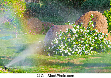Automatic Sprinkle plants in the garden Photo for microstock...