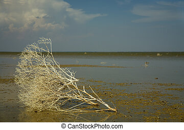 Estuary - Drying of Dairy estuary in the Zaporozhye area...