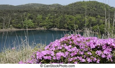 Azalea and pond - Red purple azalea flowers in front of pond