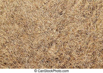 Dry burnt dead grass natural abstract background.