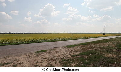 cyclist rides along the asphalt road on the background field...