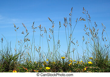 Ground view of natural long wild grass.