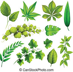 Different leaves - Illustration of the different leaves on a...