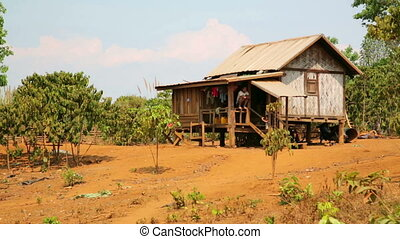 people planting coffee tree in front of village house, Laos...