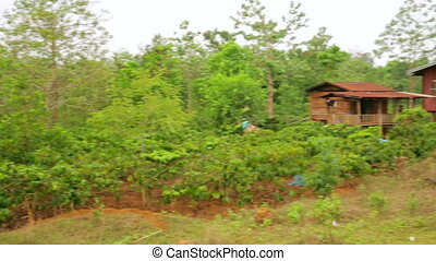 Lao village life around coffee planted Bolaven Plateau,...