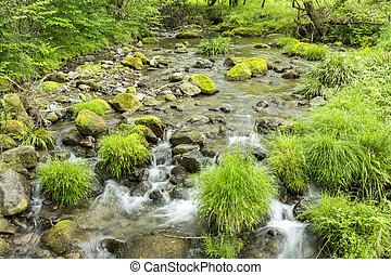 Lush green brook flowing among the stones