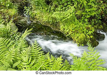 Sideways fast flowing brook between the green plants
