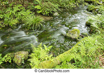 Brook flowing - High transparency brook that lush green...