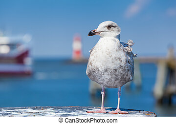 Harbor Bird - A seagull at the foreground of a harbor...