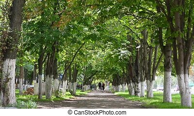 alley road in park