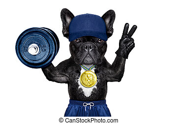 active sport dog - dog as gym trainer with gold medal making...