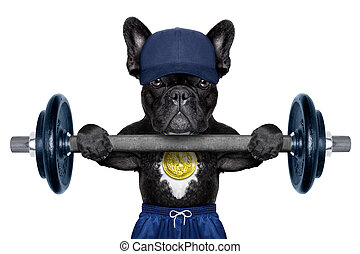 active sport dog - dog as personal trainer with gold medal...