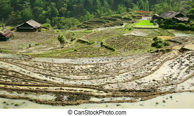 farming plowing with ox, farm in Sapa, Vietnam, primitive...